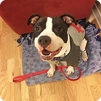 Adopt A Pet :: Rocky - Chicago, IL