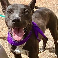 Adopt A Pet :: Leah - Casa Grande, AZ