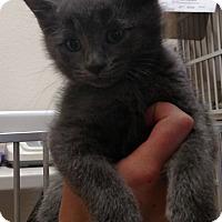 Adopt A Pet :: Kazuo - Divide, CO