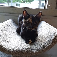 Adopt A Pet :: Shamrock - Flint, MI