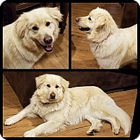 Adopt A Pet :: Snazzy - Evergreen, CO