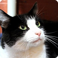 Adopt A Pet :: Giovanna - Hopkinton, MA