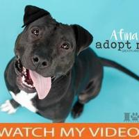Adopt A Pet :: Afina - Independence, MO