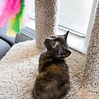 Adopt A Pet :: Robin - ROWLETT, TX