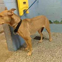 Adopt A Pet :: A506418 - San Bernardino, CA