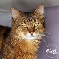 Adopt A Pet :: Baby - Lyons, NY