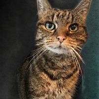 Adopt A Pet :: Cora - East Stroudsburg, PA