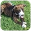 Photo 1 - Catahoula Leopard Dog/Boxer Mix Dog for adoption in White Settlement, Texas - Ziva-adoption pending