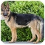 Photo 4 - German Shepherd Dog Dog for adoption in Los Angeles, California - Strauss von Steinbeck