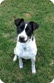 Terrier (Unknown Type, Medium) Mix Dog for adoption in Houston, Texas - Daisey