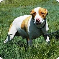 Adopt A Pet :: Haus - Cheyenne, WY