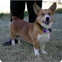 Adopt A Pet :: Clifford - Inola, OK