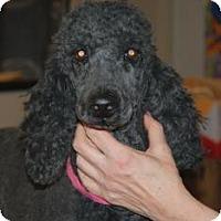 Adopt A Pet :: Halle - North Benton, OH