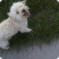 Adopt A Pet :: Bixby - Alliance, NE