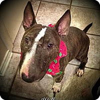 Adopt A Pet :: Wally Moon - Sachse, TX
