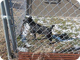 Labrador Retriever Mix Puppy for adoption in Glenpool, Oklahoma - Sadie