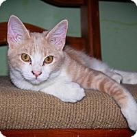 Adopt A Pet :: Jethro - Phoenix, AZ