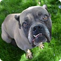 Adopt A Pet :: Fenix - Scottsdale, AZ