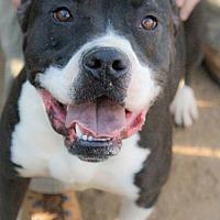 Adopt A Pet :: Floyd - Bertram, TX