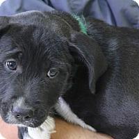 Adopt A Pet :: Peaches - Norwalk, CT