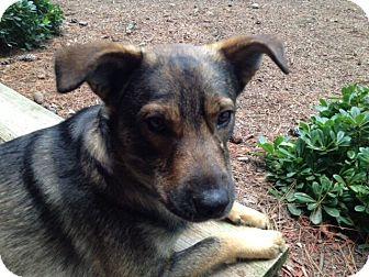 German Shepherd Dog Mix Dog for adoption in Austin, Texas - Kirby