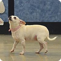 Adopt A Pet :: Max & Gidget - Rockford, IL