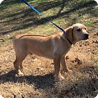 Adopt A Pet :: Merle - Windham, NH