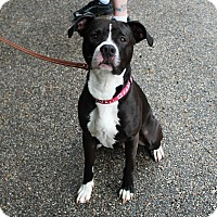 Adopt A Pet :: Zues - Muskegon, MI