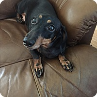 Adopt A Pet :: Peaches - Crowley, LA