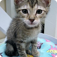 Adopt A Pet :: Squirt - Georgetown, TX