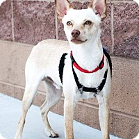 Adopt A Pet :: Karl - Apple Valley, UT
