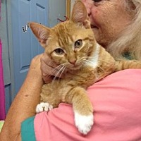 Adopt A Pet :: Comet - Picayune, MS