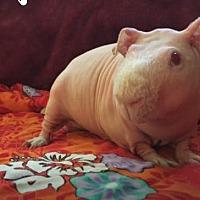 Adopt A Pet :: Larry - Fullerton, CA