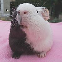 Adopt A Pet :: Eden - Fullerton, CA