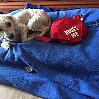 Adopt A Pet :: Jack-WATCH MY VIDEO - Irvine, CA