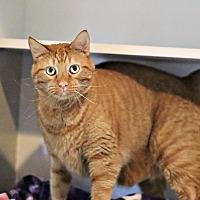 Adopt A Pet :: Ricky - Lincoln, NE
