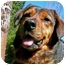 Photo 2 - Shepherd (Unknown Type) Mix Dog for adoption in Petaluma, California - Ginger