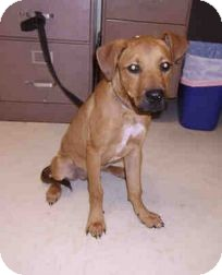 Labrador Retriever Mix Puppy for adoption in Yuba City, California - 03/26 Ty