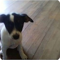 Adopt A Pet :: Kaylee in OK - Oklahoma City, OK