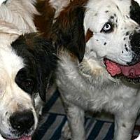 Adopt A Pet :: Cheyenne & Gretchen - Glendale, AZ