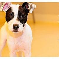 Adopt A Pet :: Chloe - Adoption Pending - Grafton, OH