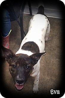 Australian Cattle Dog Mix Dog for adoption in Glastonbury, Connecticut - Eva