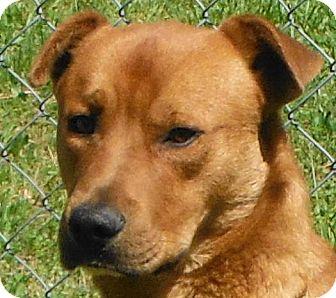 Shepherd (Unknown Type)/Retriever (Unknown Type) Mix Dog for adoption in Cedartown, Georgia - 31104951