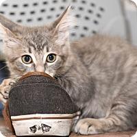 Adopt A Pet :: LilBobby - North Highlands, CA