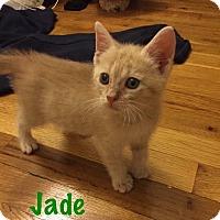 Adopt A Pet :: Jade - Jackson, NJ
