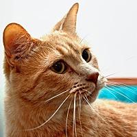 Adopt A Pet :: Tigger - Tucson, AZ