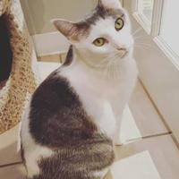Adopt A Pet :: Moodie - Hastings, MN