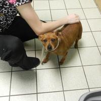 Adopt A Pet :: Dorothy - Charleston, WV