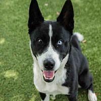 Adopt A Pet :: DIESEL - Orlando, FL
