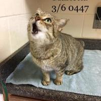 Adopt A Pet :: Marietta - McDonough, GA